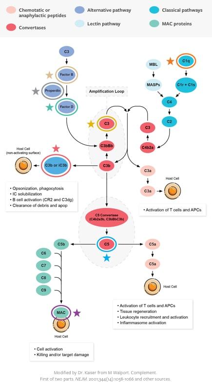 Supress Inflamation Diagram
