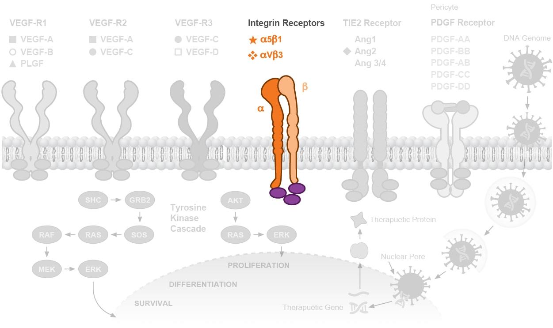 extracellular-vegf-pathways